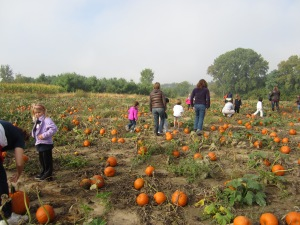 The pumpkin patch at Eugster's