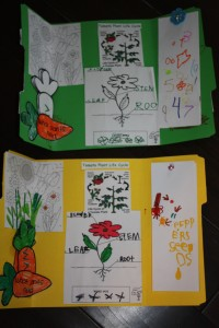 Lapbooks about plants.